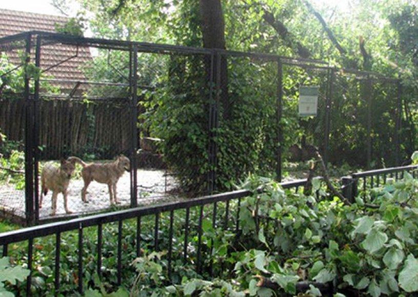 Pirminiais duomenimis, vėtros nusiaubtame Kauno zoologijos sode nenukentėjo nė vienas gyvūnas.