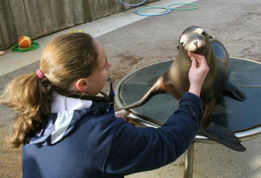ūrų muziejuje gyvenanti Kalifornijos jūrų liūtukė Matilda.