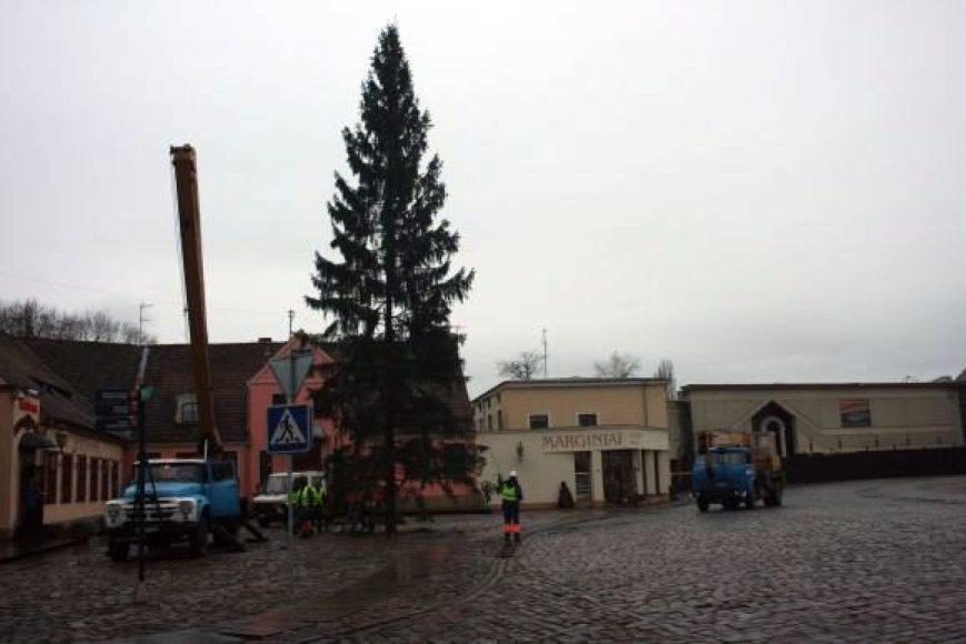 Klaipėdoje jau pastatyta Kalėdų eglė.