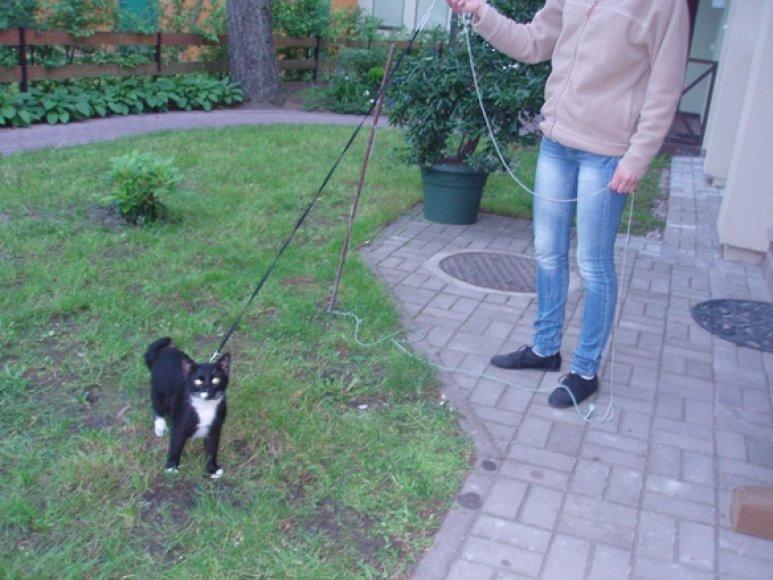 Po kivirčo su kaimynu Rita bandė savo katę pririšti.