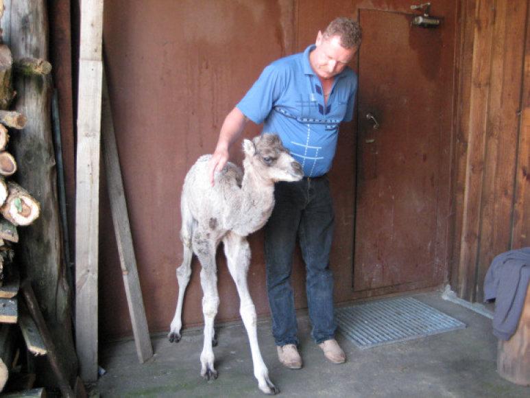 """E.Legecko vadovaujamame """"Mini Zoo"""" pora kupranugarių atsivedė jauniklį."""