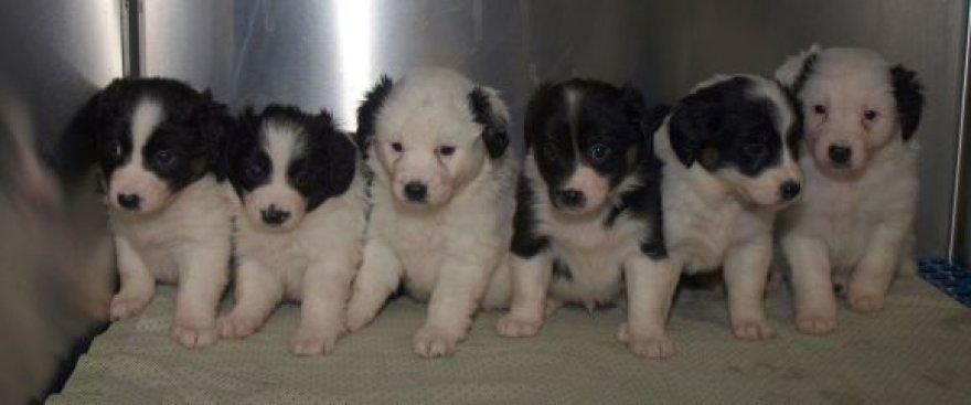 Moksleiviai rastis šunelius atnešė į gyvūnų globos namus.