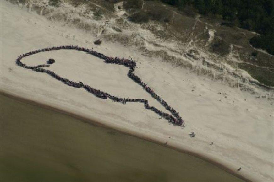 daugiau nei pusantro tūkstančio žmonių Smiltynės paplūdimyje sustojo gyva vorele, vaizduojančią Baltijos jūros kiaulę.