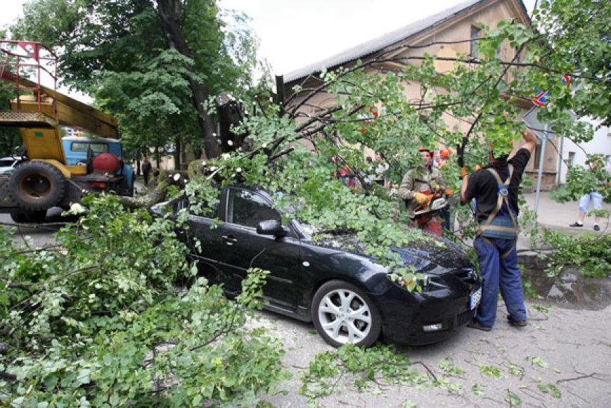 Medis nuvirto ant apynaujo automobilio, kurio vairuotojas tik per stebuklą išvengė sužalojimų.
