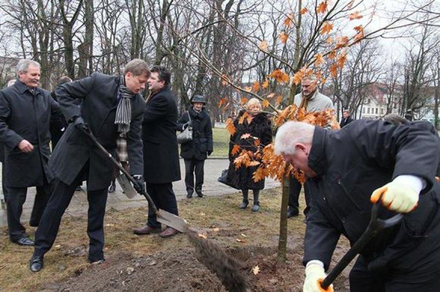 Tradicija paskutinio posėdžio metu pasodinti jauną ąžuoliuką nebuvo sulaužyta.