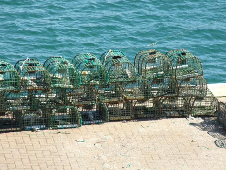 Australijos žvejus verslininkus visuomenė paragino atsisakyti tralų ir žvejoti gaudyklėmis