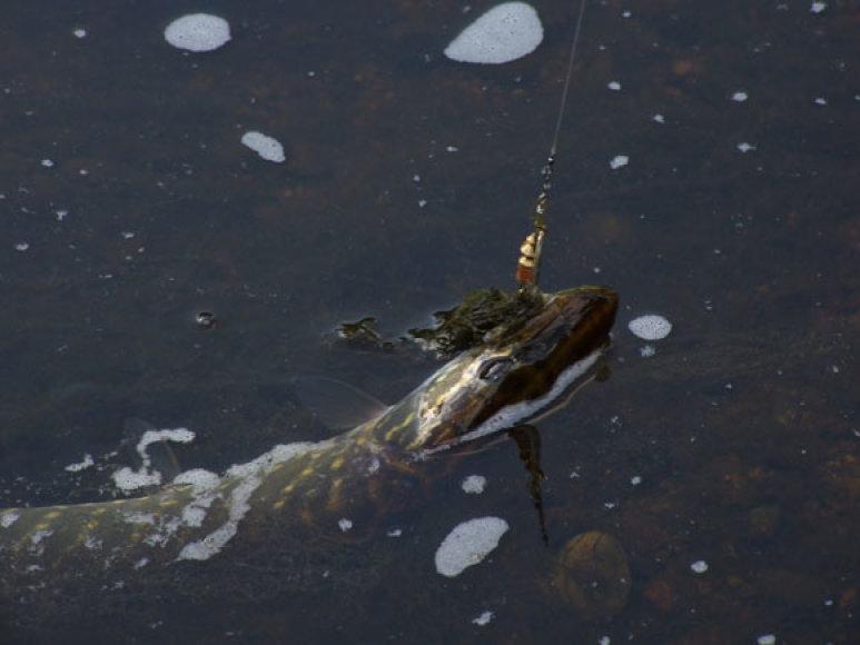 Ežere daugiau šansų išprovokuoti antrą ataką stiprius virpesius skleidžiančia sukre