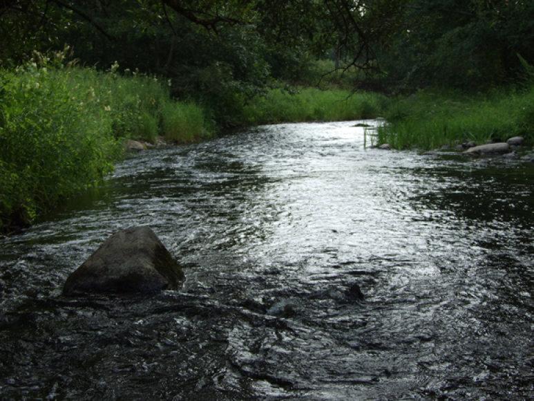 Kai upelių pakrantėse įsiviešpatauja tyla, upėtakiai įsidrąsina ir atakuoja į jų duburius grimztančius masalus