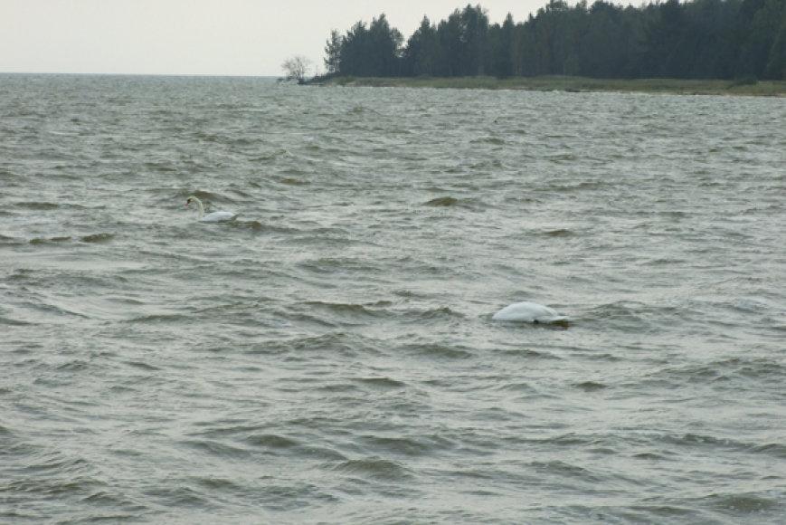 Švininė bangų spalva – meškeriotojo šventiškai nenuteikia, tačiau gelmėje palyginti šilta ir žuvys nenustoja maitintis.