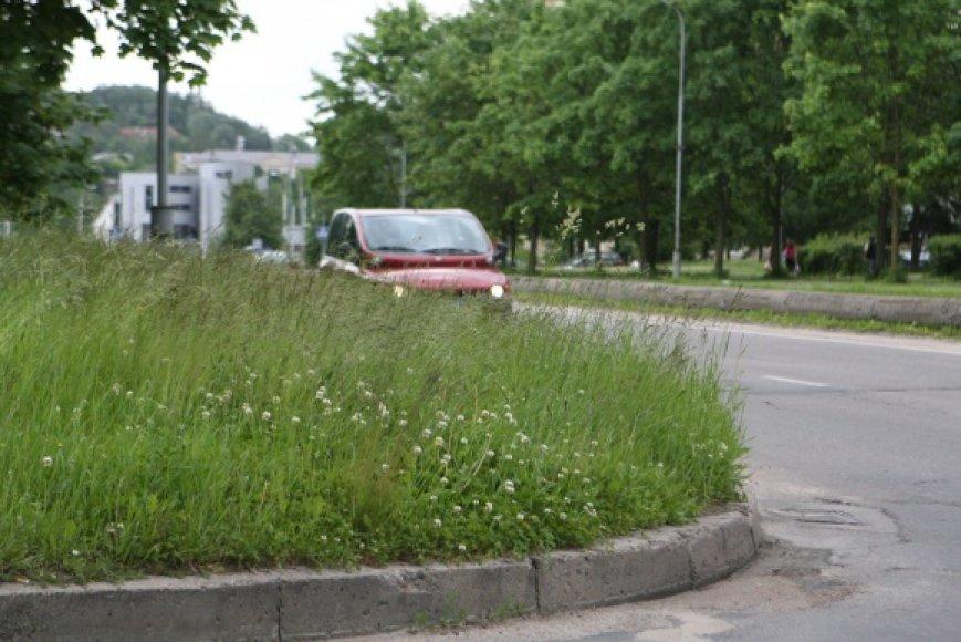 Kai kuriose Vilniaus vietose aukšta žolė trukdo eismui – išvažiuojant iš kiemų į pagrindines gatves  sunku pastebėti atvažiuojančius automobilius.