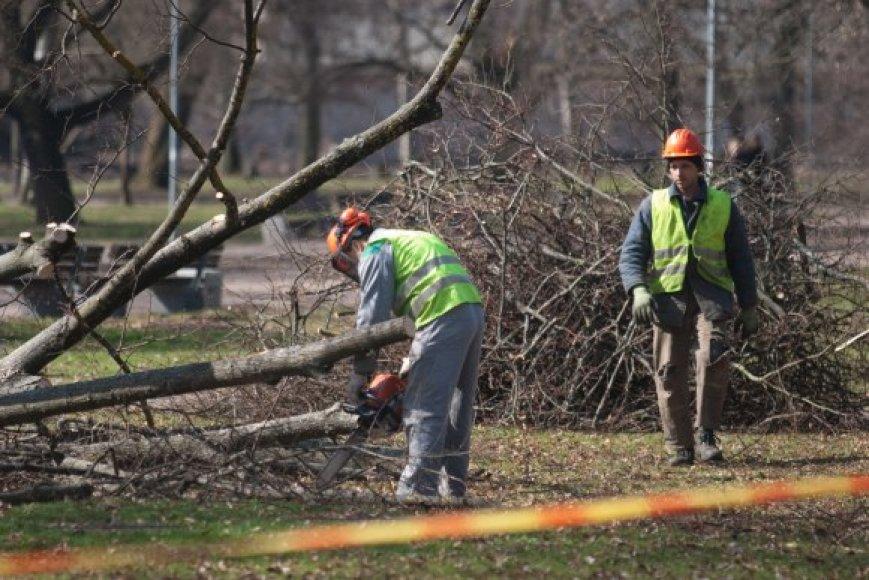 Grandioziniai Sereikiškių parko sutvarkymo darbai baigėsi medžių iškirtimu.