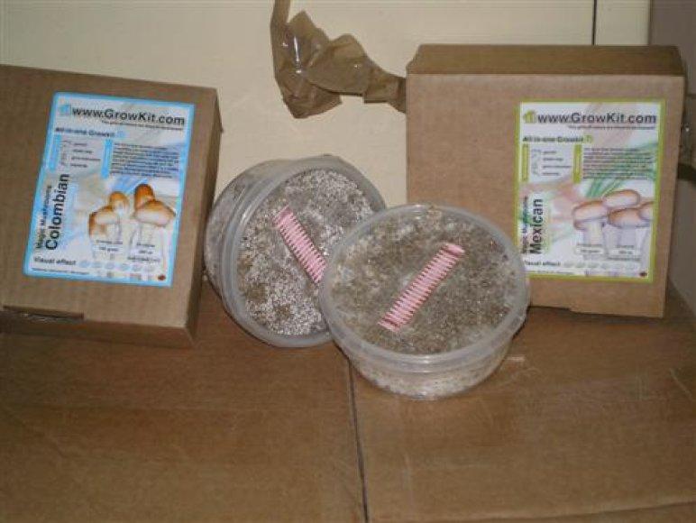 Haliucinogeninių grybų sporos