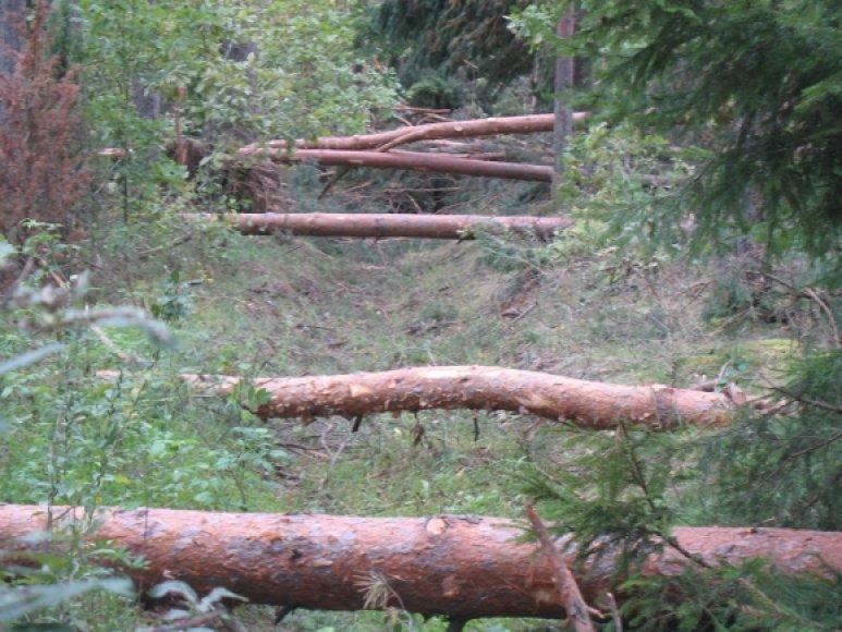 """""""Miškų ekonominės vertės didinimas"""" projektams įgyvendinti šiemet skirta beveik 25 mln. litų"""