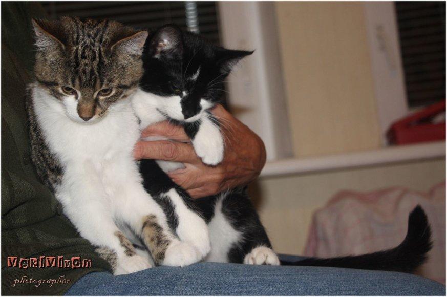 Abu katinukai