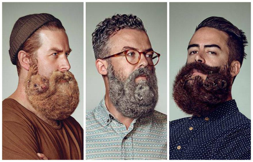 "Barzdos ""Schick"" reklamoje"