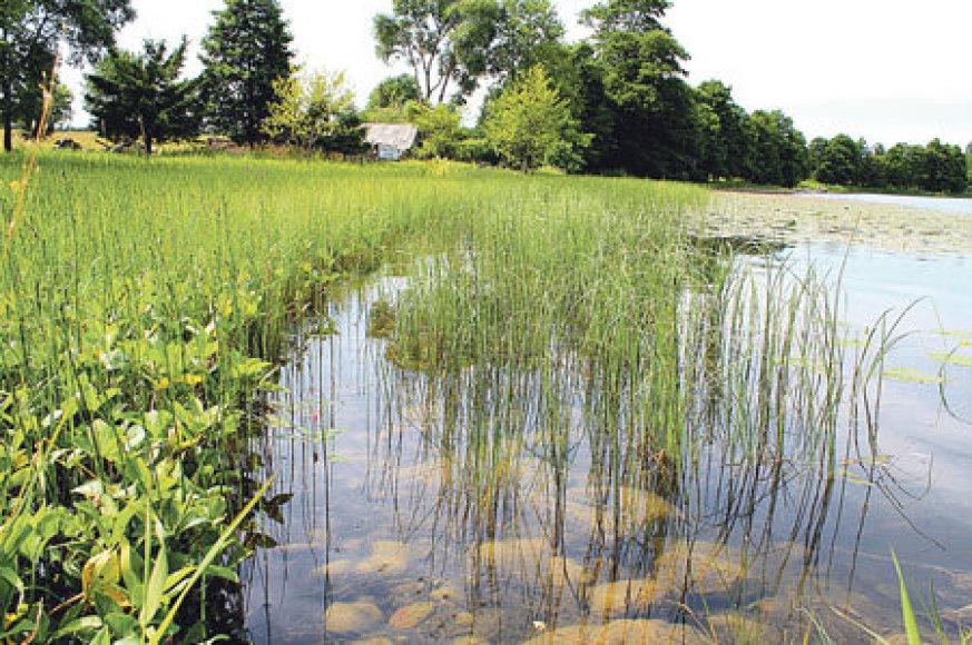 Kašučių (Kretingos R.) ežere - senovinė žemaičių kūlgrinda?
