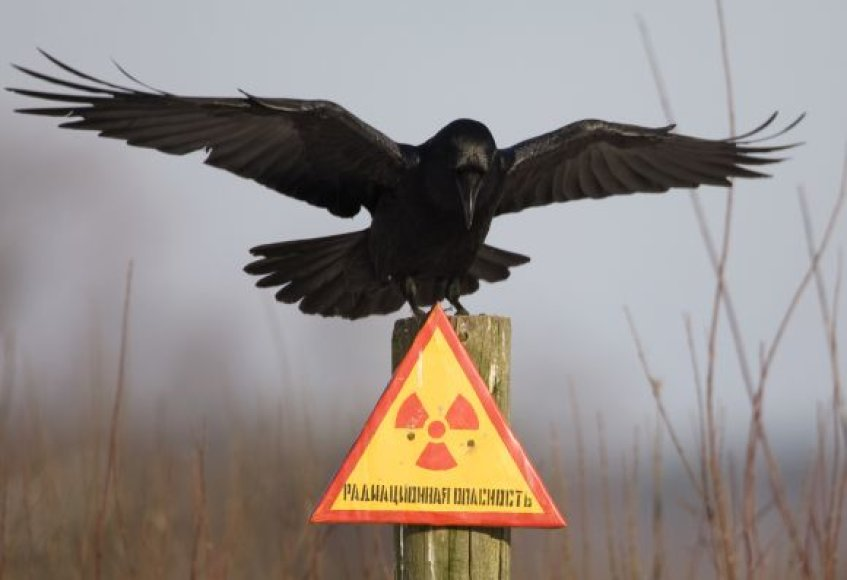 Paukštis netoli Černobylio