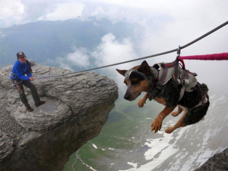 """Pirmasis pasaulyje """"wingsuit"""" šuolis su šunimi"""
