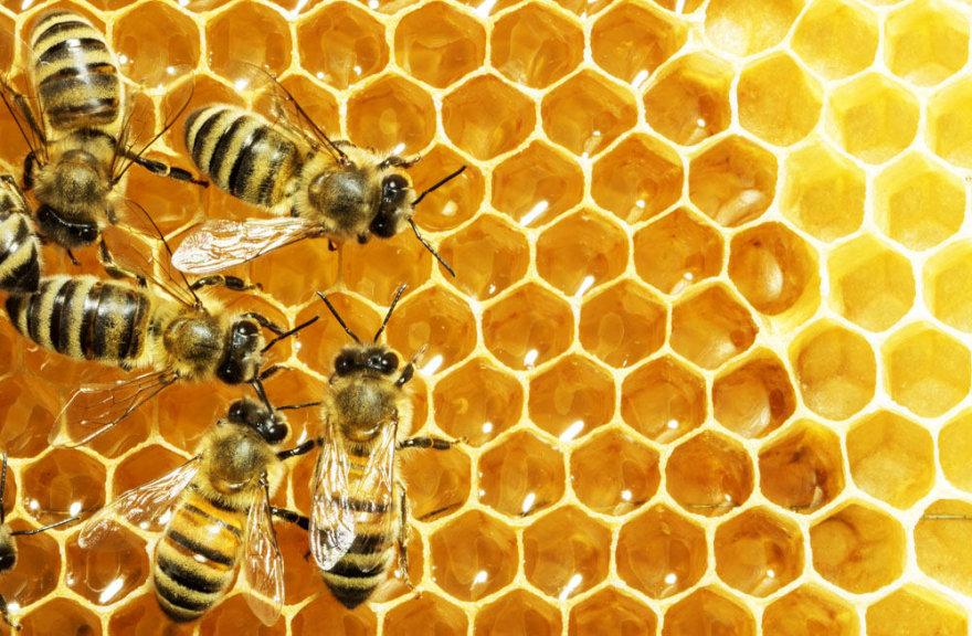 Bitės