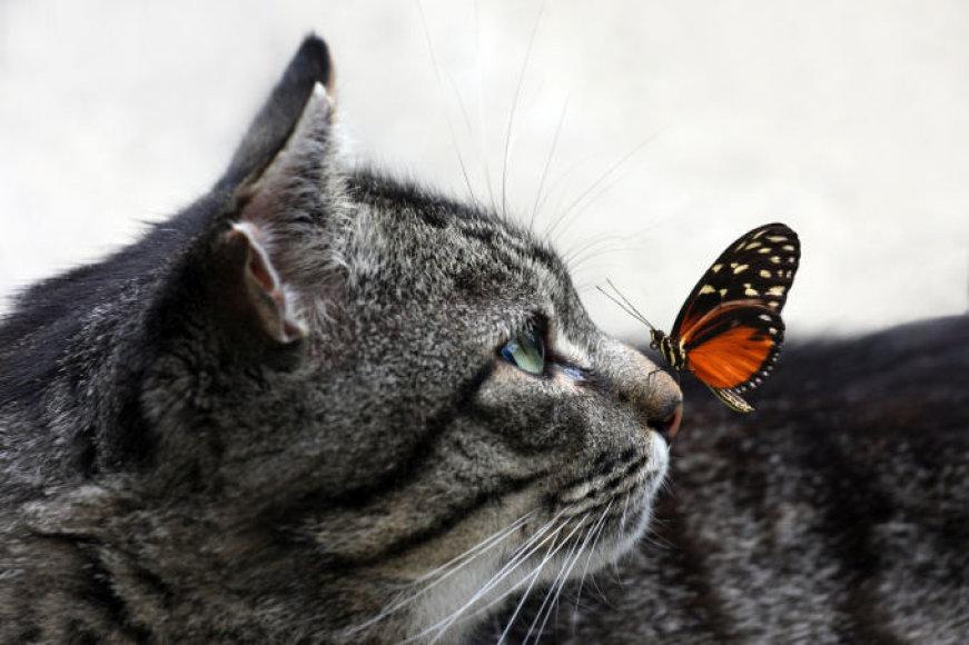Katė su drugeliu
