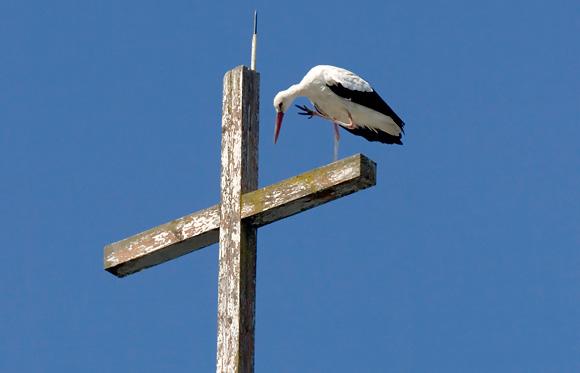 Kryžius