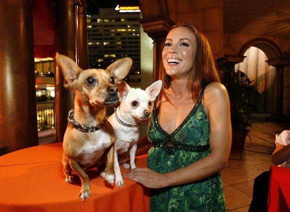Aktorė Alyssa Milano šypsosi šalia Rusco (K) and Chihuahuas Angelas