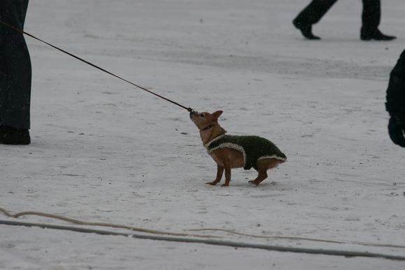 Šunų ir kačių savininkai turėtų atkreipti dėmesį į pasikeitusias Gyvūnų laikymo Kauno mieste taisykles.