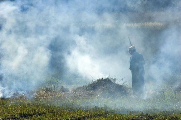 Žolės deginimas