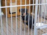 Ignalinos policijos nuotr./Ignalinos policininkai šiuo šunimi rūpinosi daugiau kaip parą