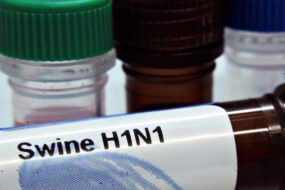Kiaulių gripo virusas