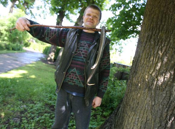 Kęstutis Mačiulis gyvatę rado Kauno mieste.