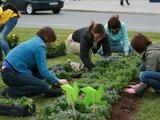 Gėles sodino ir aplinkosaugos specialistai.