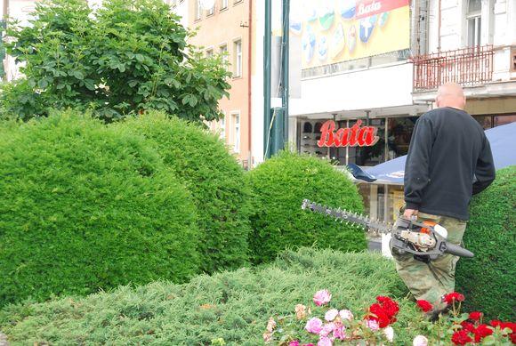 Dekoratyviniai augalai, pasirodo, gali dominti Panevėžio ilgapirščius.
