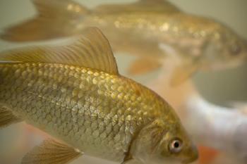 Žuvys.