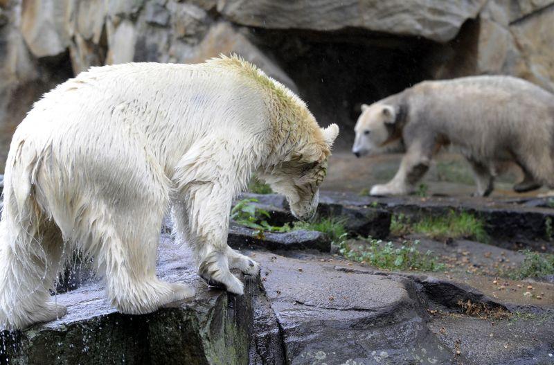 Gianna (kairėje) žaidžia su Knutu.