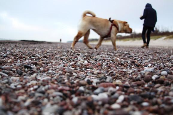 Girulių paplūdimys visuomet buvo gana akmenuotas, tačiau dabar palei krantą driekiasi tarsi žvyrkelis.