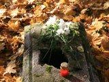 J.Andriejauskaitės nuotr./Kalotės kapinaites rasti gana sunku - kapavietes užkloję lapai.