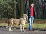 Eriko Ovčarenko/15min.lt nuotr./Baltijos cirko svečias - gepardas