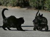 """Reuters""/""Scanpix"" nuotr./George'o W.Busho augintiniai – kalytė Miss Beazley ir katė India"