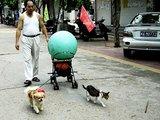 """""""Scanpix"""" nuotr./Kinas išmokė šunį ir katę kartu traukti vežimėlį."""