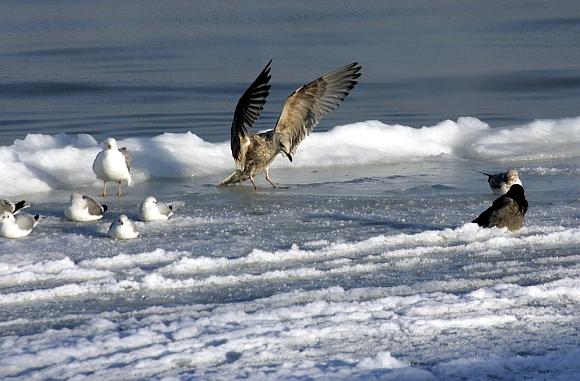 Apšalusi Baltijos jūros pakrantė