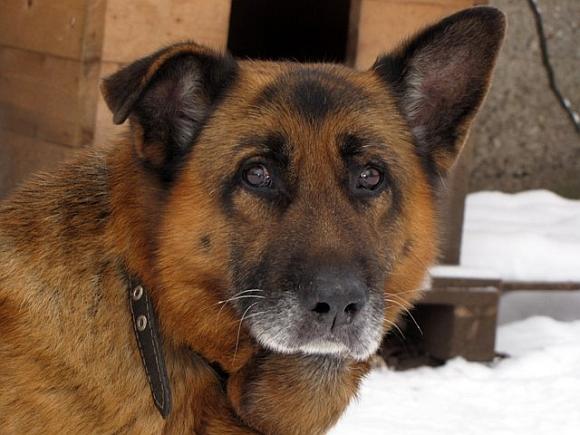 Šuo Argus