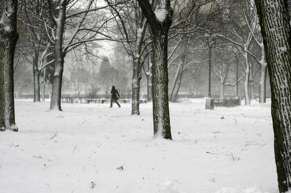 Sniegas Rygoje