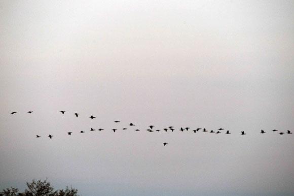Į Lietuvą parskrenda paukščiai