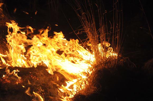 Dega sausa žolė