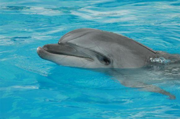 Atikos zoologijos sodo nuotr./Delfinai
