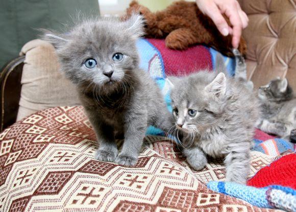 Užmuštos katės jaunikliai
