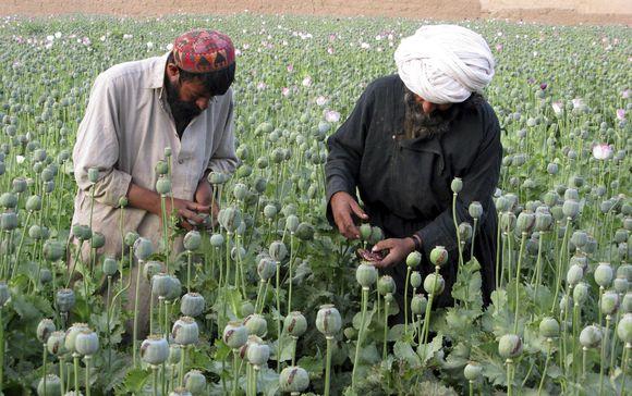 Opiumas – daugelio afganistaniečių pajamų šaltinis