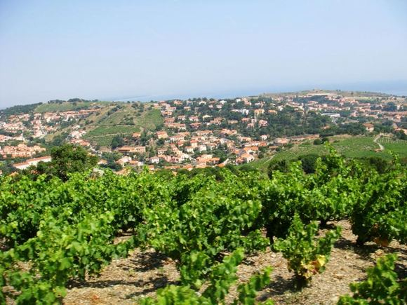 Asm. arch nuotr./Prancūzijos vynuogynai