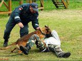 Policijos departamento nuotr./Tarnybinių aunų mokymai